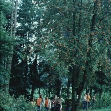 1976 Wülfte__38