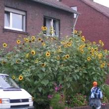 2005 Weltjugendtag WYD_78